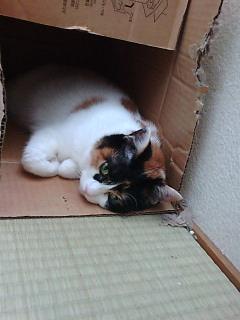 箱ねこ・2