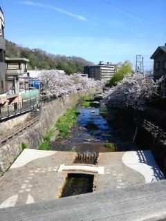 太閤橋の桜