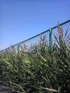 草の匂いが…【9<br />  月19日】